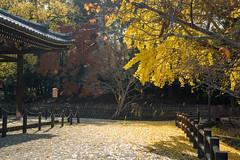 奈良公園43・Nara Park (anglo10) Tags: japan 奈良県 奈良公園 紅葉 autumnleaves イチョウ 建築物 architecture