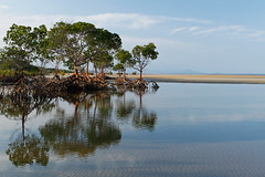 Yule Point - Red Mangrove Reflections (Rob Harris Photography) Tags: beautiful beauty beach naturalbeauty nature northqueensland queensland tropics tropical australia seaside serenity sand ocean outdoors reflection sky clouds mangroves