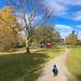 Walking Bully in Yver Rocher Park during Fall season