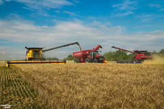 CTF Wheat Harvest | CASE IH // NEW HOLLAND // HORSCH (martin_king.photo) Tags: harvest harvest2018 ernte 2018harvestseason ctfharvest controllentrafficfarming ctf wheat grain combineharvester combine harvester new modernmachine summerwork powerfull martin king photo machines strong agricultural great czechrepublic agriculturalmachinery farm working modernagriculture landwirtschaft martinkingphoto moisson machine machinery field huge big sky agriculture power dynastyphotography lukaskralphotocz day fans work place yellow gold golden eos country lens rural camera outdoors outdoor caseih macdonheader macdon macdonindustries goldenhour colours landscape fields lines axialflow controlledtrafficfarming caseihmagnum newholland newhollandcr1090