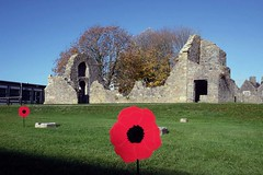 58 of Year 5 - 11th November 2018 - Poppy in front of the Kings of Wessex ruins (Hi, I'm Tim Large) Tags: poppy somerset cheddar village lost men war wars 1918 sad sadness rememberance day 2018 school grounds flower red 365 58 fuji fujifilm 23mm f14