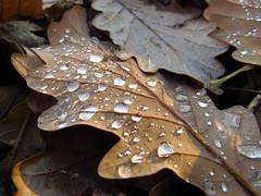 IMG_4057 (germancute) Tags: outdoor nature autumn herbst landscape landschaft thuringia thüringen germany germancute deutschland forest wald mond pilz see fall