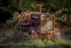 Retired (Paul Rioux) Tags: caterpillar tractor bulldozer old vintage antique decayed decaying rust rusty rusting vehicle equipment morning sunrise light plants overgrown prioux outdoors