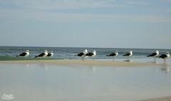Reunião... (alordelo) Tags: rio viagens sony travel praia brasil brazil céu beach horizonte ilovenature paisagens clouds color contraluz nature sky sea trilhas visual natureza nuvens reflexo horizon alordelo lordelo