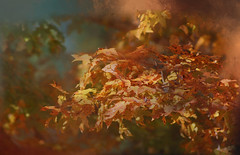 Autumn Leaves... (Patlees) Tags: autumn 2018 nc river textured dt