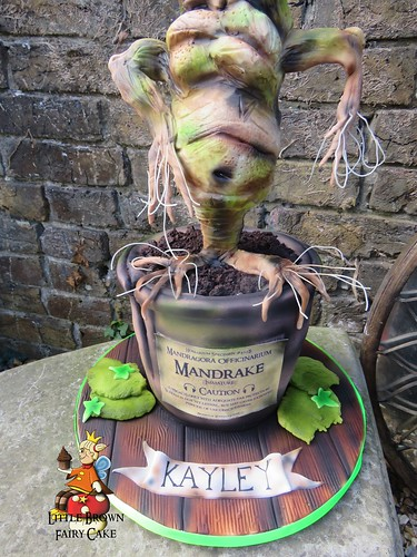 a mandrake outside pot