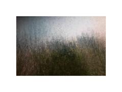 Winter Light #1 (ICM's) Tags: icm intentionalcameramovement multipleexposure trees landscape longexposure woodland