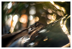 Cruising through Christmas (leo.roos) Tags: voorruit windscreen windshield windscreenwiper windshieldwiper ruitenwisser car reflection weerspiegeling christmas kerst kerstboom christmastree lights lichtjes lampjes christmaseve a7 emilbuschagrathenowneokinof16f50mm neokino emilbuschneokino5016 bauerselectons 16mmprojector 1936 darosa leoroos