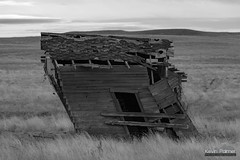 Defying Gravity (kevin-palmer) Tags: ekalaka montana plains prairie october fall autumn morning cloudy overcast nikond750 nikon180mmf28 telephoto old abandoned cabin house wooden fallingapart leaning blackandwhite monochrome homestead grass