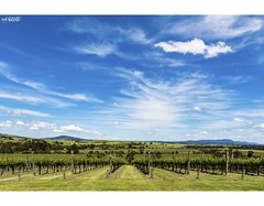 The Vineyards (red stilletto) Tags: yarravalley yarrawood yarrawoodwinery yarrawoodvineyard wine winery vineyard vines view views sky clouds spring