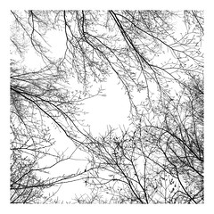 Winter's lace. (jeanne.marie.) Tags: buds stark iphoneography iphone7plus sky trees mydailywalk lace branches squareformat blackandwhite
