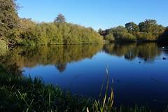 Postford Pond near Chilworth, Surrey 1 (Leimenide) Tags: chilworth surrey england north downs autumn trees pond lake water reflection landscape nature