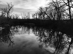Deep within (ewalker0298) Tags: life river dailyphoto beauty deep darkness caption capture shot moment iphoneography photography trees nature blackandwhite