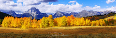 Moment (Chad Dutson) Tags: moment grand teton national park tetons mountain mountains mount moran wyoming fall autumn season leaf leaves tree tress aspen aspens landscape panorama forestscape mountainscape nature wilderness wild forest chad dutson