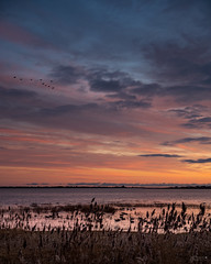 (Mr. Tailwagger) Tags: tailwagger plum island wildlife refuge leica m10 summilux 50mm bc asph ducks reeds geese sunrise merrimack river