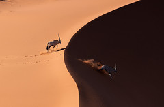 _Q4I7698-Edit (buddy4344) Tags: helicopter namibia aerial oryx sanddune