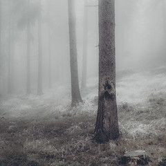 In the Fog  /01 (KromOner) Tags: kromoner art design minimal dark nature forest trees woods silent solitude silence mood atmosphere quiet canon austria fog foggy mist misty moody