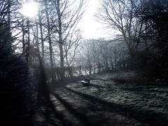 Shadowed turning (Maddy B Clark) Tags: nottingham nottinghamshire winter cold frost morning weather england countryside contrast shadow trees sinister woodland country path bench point focus grass