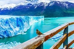 "Perito Moreno Glacier-0680 (kasiahalka) Tags: argentina argentinalake glacier hotel ice icefield iceberg kostenaikehotel lake losglaciaresnationalpark miradordelossuspiros nationalpark np patagoniadesert patagoniasteppe patagonia lagoargentino southamerica town water ""santa cruz province"" unesco worldheritagesite"