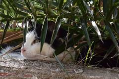 Descansando en compañía (rosaadda) Tags: nikon 5300 felino cat gatos gato