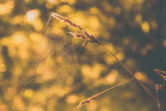 Outdoors moments (Pan.Ioan) Tags: nature spiders web spider outdoors beauty morning day countryside scenery closeup plant growth