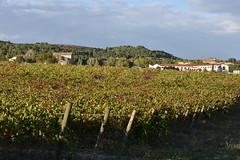 Montsarra (esta_ahi) Tags: montsarra santmartísarroca mussarra torrellesdefoix ipa4867 vinya viña viñedo vineyard vitisvinifera penedès barcelona españa spain испания