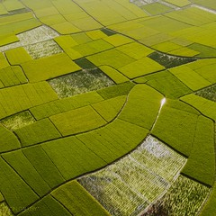 Farm grid (songallery) Tags: aerial aerialgraphy agriculture china chinese crop dji drone farm field green m2pb mavic2pro peasant village 中国 農地 農村 農業 農田 cn