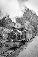 Steaming into the New Year (babs pix) Tags: no4edwardthomas talyllynrailway tywyngwynedd steamrailway steamengine steamtrain narrowgauge narrowgaugerailway heritage blackandwhite mono greatlittletrainsofwales winter