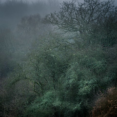 Savernake Forest (tobchasinglight) Tags: beechtrees englishwoodland landscape landscapeporfolio marlborough mist oaktrees savernake savernakeforest silverbirch trees uk wiltshire winter2018 woodland â©paulmitchell s mood is bit gloomy but i still like it