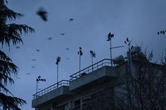 Minus zero (Celtis Australis) Tags: raven craw night darkness urban city pentax flying bird lowlight nightvision icestorm winter jackdaw urbanlandscape tree sky