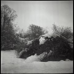 1jan2019120_1 (shpthn) Tags: lubitel lubitel166 moscow russia winter fomapan iso200 mediumformat