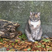 Sam ..... de kat van de buren ...