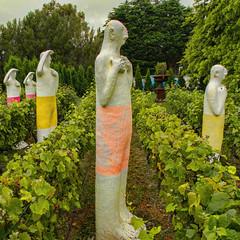looking for something (glasnevinz) Tags: newzealand wairarapa martinborough vinyard aylstone