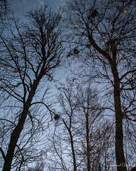 Reflets hivernaux (Tormod Dalen) Tags: pentax limited arbres trees reflections reflets hiver winter bluehour heurebleue