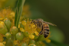 D75_6729 (crispiks) Tags: nikon d750 105mm f28 micro r1c1 albury botanical gardens new south wales