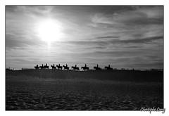 Photo de 2008. (christophe.leroy19) Tags: noiretblanc noirblanc nb blackandwhite blackwhite bw contrejour chevaux cheval