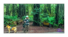FIZZY-BANDIT-JEDADIAH SMITH-REDWOODS-HDR-2018-4532W-2460H-300PPI- © Cody Jacobson-ZEN MOUNTAIN MEDIA all rights reserved (codyjacobson@zenmountainmedia.com) Tags: fizzybanditjedadiah smithredwoodshdr20184532w2460h300ppi zen mountain logo tshirt poster design photohsop digital art portfolio landscape photography jedadiah smith redwoodnational forest ca nikon samsung galaxy s8 canon t6i retouching aurorahdr photoshop camera raw redwoods forestl trees wife beautiful woman bandit dog portrait green evening hiking nature love winter grove oldgrowth colors colorful tourism travel oregon california 2017 outdoors picoftheday photo 2018 exploringtheartofimagination zenmountainmediacom