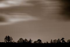 Treeline at Mawnan (Dom Haughton) Tags: mawnan helfordpassage trees tree treescape longexposure canon5diii canon cornwall colour sky blackwhite blackandwhite blancoynegro britain pretoebranco biancoenero noiretblanc kernow mono monochrome winter february