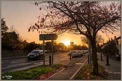 Facing The Sun (PixelRange) Tags: sanjaysaxena pixelrange nikond7000 nikon18300mm streetshot street colors leaf fall sunset trees forest sunflair outdoor landscape autumn fallcolor autumncolor road cars footpath