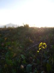 背伸び / Self-stretching to see the mountain (しまむー) Tags: panasonic lumix dmcgx gx1 g 20mm 40mm f17 asph sunset