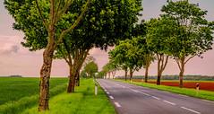 Anglų lietuvių žodynas. Žodis a-road reiškia kelias lietuviškai.