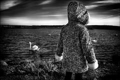 Notre avenir... / Our future... (vedebe) Tags: enfant paysages paysage etangdeberre etang cygne ciel lumière noiretblanc netb nb bw monochrome animaux oiseaux