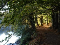 Border between light and shade (Phil Gayton) Tags: water tree path track trail leaf foliage fall autumn scenery riverside walk river dart totnes devon uk