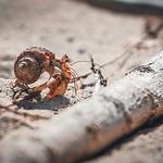 Little #adventures everywhere 😍 _____ #cuba #cubalove #travelling #traveldestinations_ig #igs_photos #ig_shotz #ig_color #igworldclub_travel #ig_cuba #sand #crab #shell #beach #macro #makro #macrophotography #photography #photooftheday #happyad thumbnail