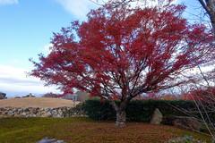 dsc00640-1_39728846392_o (tingalan5) Tags: japan osaka kyoto 2017 winter olypmus