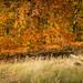 Herbst-Ruhe