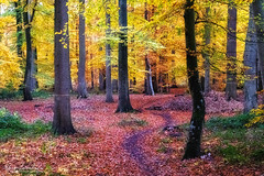 Fairyland (Toucaly) Tags: glamourglow autumn couvert france fall forêt picardie forest forestlandscape wood oise overcast automne europe laneuvilleenhez paysageforestier