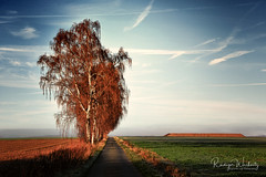 November (r.wacknitz) Tags: november fog birch aurorahdr autumn morninglight niedersachsen nikond3400 nikkor nature nikcollection himmel feldweg
