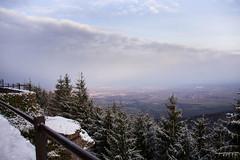 Mont Sainte Odile (meyer.morgane7) Tags: mont saint odile neige snow landscape paysage sapin arbre alsace bas rhin obernai ottrott effet photographie inspiration
