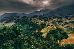 Sapa, Vietnam. (PhotoExpozure) Tags: hanoi landscape river sapa vietnam hills mountains fansipan paddy rice fields forest jungle bridge